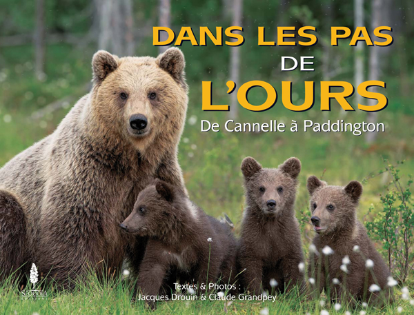Dans les pas de l'ours