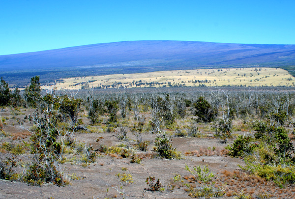 Mauna Loa General