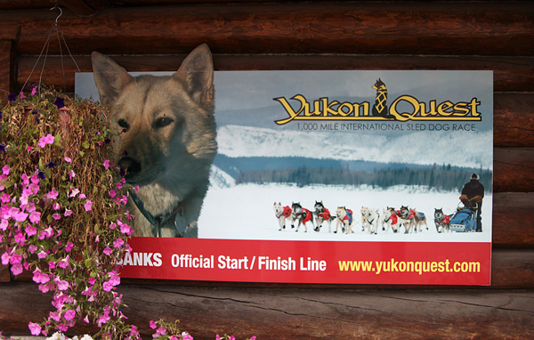 yukon-quest-02_modifie-1