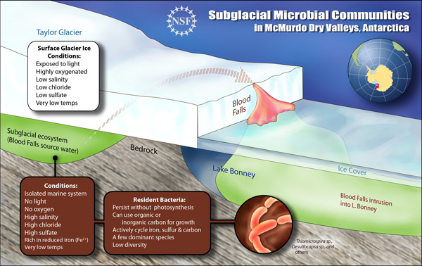 blood-falls-01 - Mystery of Antarctica's Blood Falls finally unveiled - Science and Research